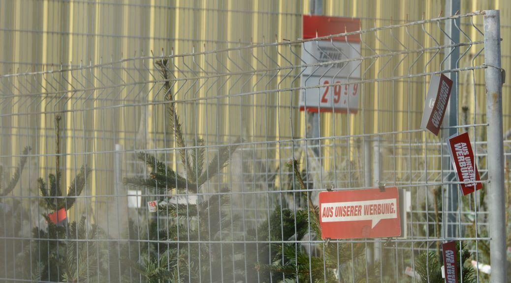 Der Weihnachtsbaumverkauf startet Mitte November